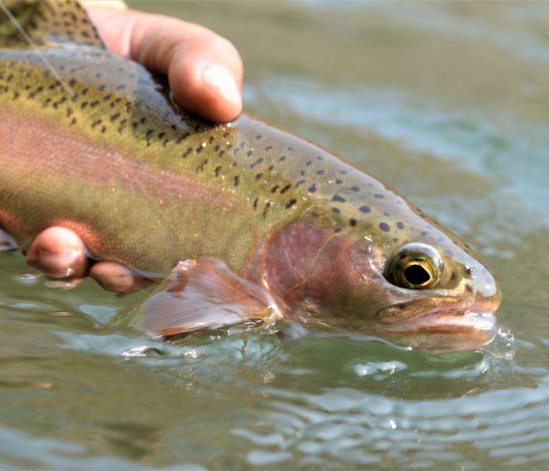 Fishing in Maupin, Oregon